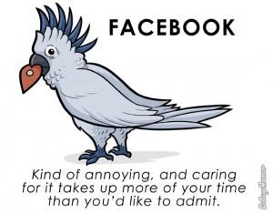 Facebook, pet, parrot